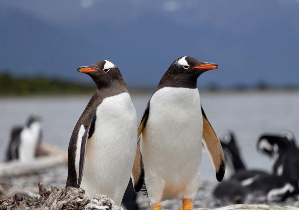 pinguinos en ushuaia