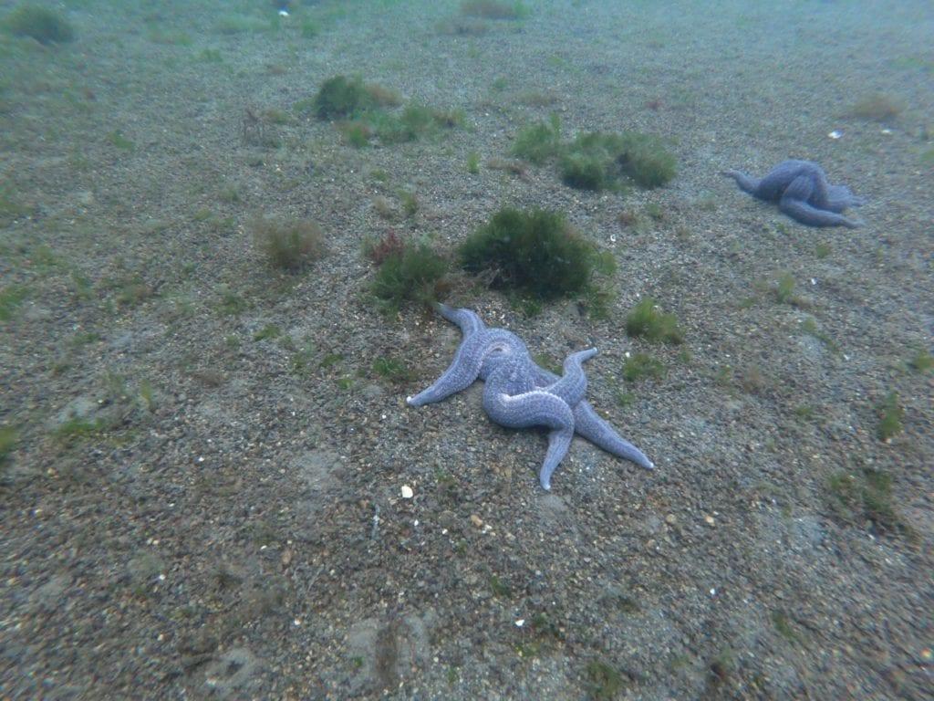 estrella de mar bajo el Canal Beagle